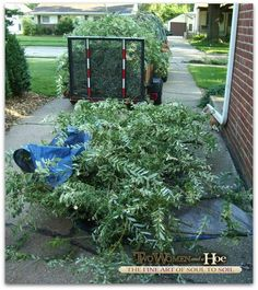 sustainable landscaping = right plant, right place! Click pic to read more! ✿✿✿
