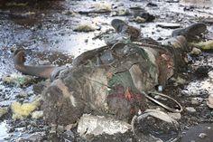 مجزرة أخرى من آل سعود  #الشجرة_الملعونة #مجزرة_القاعة_الكبرى #هولوكوست_السعودية  @alsaudianet  Al-saudia.net