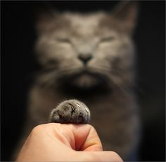 Mojo gives us a fist bump... he's a pretty cool cat.