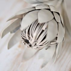 Until quite recently, I wasn& a big fan of proteas. I felt that they were a bit fuddy duddy, not as cool as lillies or as pretty as. Diy Flowers, Paper Flowers, Protea Flower, Metal Art Projects, Paper Magic, Shades Of White, Laser Cutting, Silhouette Cameo, Candle Holders