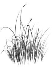 How to Draw Grass, Pencil Drawing Lesson