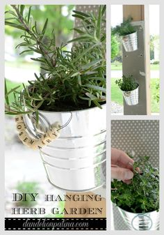 DIY Hanging Herb Gar