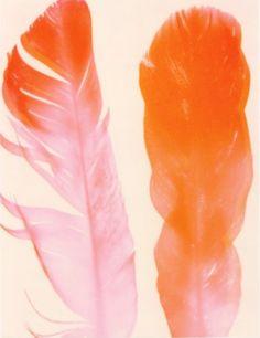 Flamingo Pink and Orange Feather