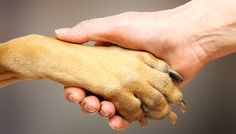 18 things you didn't know about dog paws