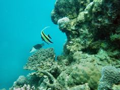 Scuba diving in Cairns  http://www.scubacrowd.com/diving-in-australia/12