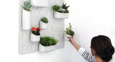 A kit to do your own vertical garden! http://www.treehugger.com/sustainable-product-design/wanted-a-planter-for-growing-vertical-gardens-indoors.html
