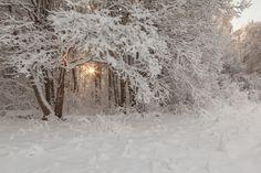 Фотография Winter snow-covered wood. автор Vitalii Verevkin