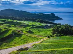 Rice Terraces jigsaw puzzle in Great Sightings puzzles on TheJigsawPuzzles.com