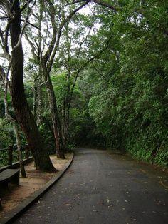 Floresta da Tijuca | Fotografia de JouElam | Olhares.com