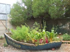 A kitchen garden in a rowing boat!