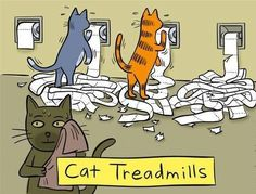 Funny pictures about Cat treadmills. Oh, and cool pics about Cat treadmills. Also, Cat treadmills. I Love Cats, Cute Cats, Funny Cats, Funny Animals, Cute Animals, Silly Cats, Animal Jokes, Funny Jokes, Funniest Animals