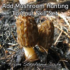 Add finding and collecting wild mushrooms to your #selfreliance skill set. Here is how to start learning....