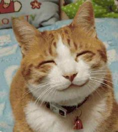 the cat who always smiles | smiling-cat