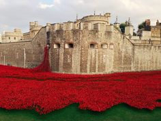 Tower of London poppys's