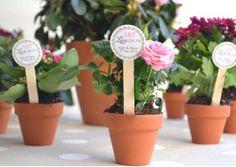 Plantas para regalar a tus invitados en la boda - foto Etsy