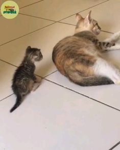 Kittens And Puppies, Baby Kittens, Cute Cats And Kittens, I Love Cats, Kittens Cutest, Baby Animals Super Cute, Cute Baby Cats, Cute Dogs, Funny Cute Cats