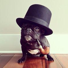 Black pug dog  wearing hat & pipe