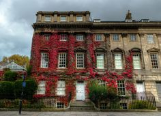 https://flic.kr/p/GX5onX | Boston ivy climbing on georgian style building, Bath, England | Boston ivy climbing on georgian style building IMG_0093_4_5_tonemapped_nw_cropped_rotated_filters
