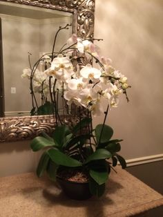 Who wouldn't love Orchids! Did this piece for a clients foyer