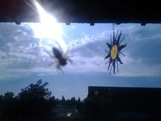 Photography taken of little grey spider on a window with the sun coming through