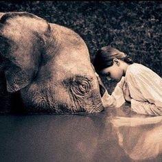 """1 de Novembro - Dia Mundial do Veganismo  ou seja, dia mundial do amor, da vida, da ética, da compaixão, do respeito às diferenças, da sustentabilidade, da igualdade, da liberdade, da paz, da consciência única, da evolução para um mundo melhor! Que todos os nossos dias sejam veganos! #govegan """"Todos os seres vivos tremem diante da violência. Todos temem a morte, todos amam a vida. Projete você mesmo em todas as criaturas. Então, a quem você poderá ferir? Que mal você poderá fazer?"""" - #Bud..."""