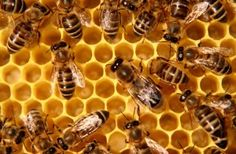 Police Bees: How Honey Bees Can Help Tackle Illegal Drug Cultivation