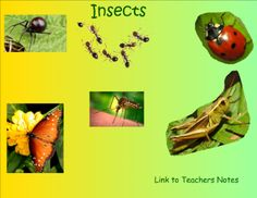 Insects SMART notebook lesson. Lots of reading comprehension.