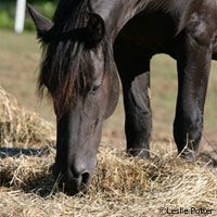 Help for your coughing, wheezing horse—understand and manage recurrent airway obstruction.