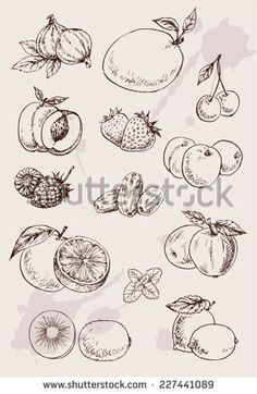 Collection Of Hand Drawing Isolated Fruits Stock Vector Illustration 227441089 : Shutterstock