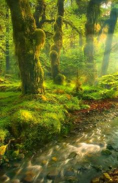 Sunlit grove  | nature | | magical forests |  #nature #amazingnature  https://biopop.com/
