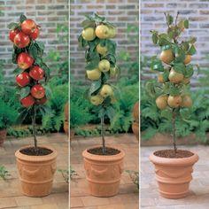 Cómo cultivar frutales en columnas en patios o balcones Small Gardens, Planter Pots, Beauty, Harvest, Little Gardens, Beleza, Cosmetology, Plant Pots