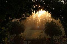 Sunrise Sunrise, Celestial, Garden, Outdoor, Outdoors, Garten, Lawn And Garden, Gardens, Outdoor Games