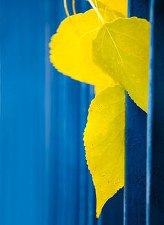 Inspirational Blue and Yellow Pictures