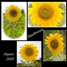 Ein Strauss aus bunten Sommerblumen