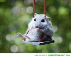 little mouse on a swing :D