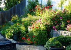 cottage garden english garden country garden english country