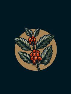 Ceren Burcu Turkan - Illustrations Coffee branch illustration old style textured handmade vintage Coffee World, Coffee Is Life, Coffee Shop, Coffee Logo, Coffee Poster, Coffee Coffee, Vintage Logo Design, Graphic Design, Cafe Logos