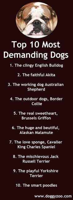 Top 10 Most Demanding Dogs