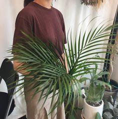 Tropical leafs