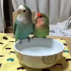 Great No Cost Pet Birds lovebird Ideas In the event that you share your daily life — and home — with a puppy bird, containing mess and Funny Birds, Cute Birds, Pretty Birds, Beautiful Birds, Animals Beautiful, Cute Little Animals, Cute Funny Animals, Funny Parrots, Bird Gif