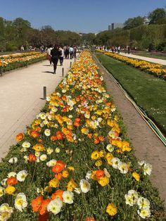 Vues printanières de la grande perspective du Jardin des Plantes de Paris http://www.pariscotejardin.fr/2016/05/vues-printanieres-de-la-grande-perspective-du-jardin-des-plantes-de-paris/