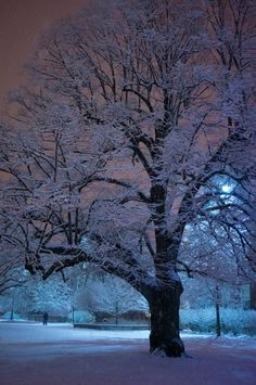 University of Rochester ... a magical winter pic from my alma mater