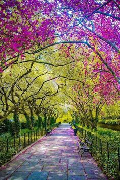 Spring, Central Park, New York City.