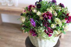 ふりふりアンティークパンジーのギャザリング-季節の花の寄せ植え- by 華もみじ フラワー・ガーデン その他