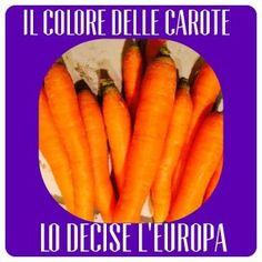 Il colore delle carote lo decise l'Europa -   Vi avevo già accennato quanto siano ortaggi gettonati in casa mia (clicca qui per l'articolo) e anche che vi avrei svelato una curiosità...... Ebbene si, in origine le carote erano di colori violacei, prugna e nei …