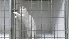 Este gato escapista