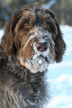 what a face. reminds me of my Ridley (RIP) who always loved sticking his head in the snow. Miss you Riddy.