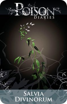 Poisonous Plants: Sage of the Diviners Salvia Divinorum, Poisonous Plants, Deadly Plants, Poison Garden, Gothic Garden, Hedge Witch, Wicca Witchcraft, Medicinal Plants, Book Of Shadows
