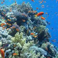 Sharm el- Sheik, Egypt.  Snorkeling  in the Red Sea. Best I've ever seen.  So  beautiful!