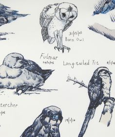 Oh dear!!! Ornithology by Edwyn Collins! Sketch book of birds on fabric complete with dates of when they were drawn, he drew a bird a day as part of his rehabilitation. Oh my! AW11